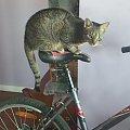kot rowerzysta #kot #rower
