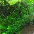 Akwarium na wodzie demineralizowanej #akwarium #rośliny