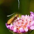 Motyl #Owady