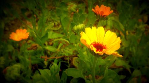 kwiatki ;)
