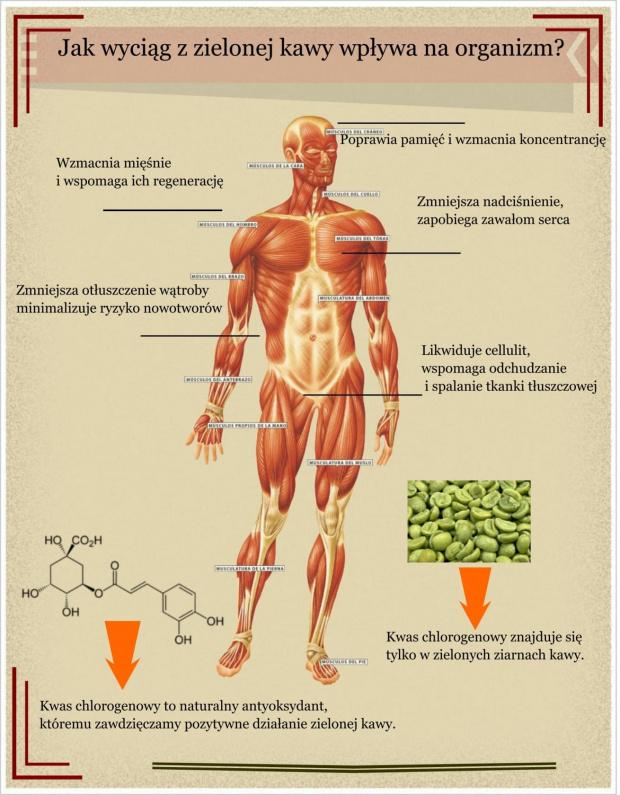 b7d0285fd7b6b2b1gen Korzyścia dla zdrowia płynące ze stosowania wyciągu z zielonej kawy