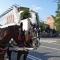 Piękne konie krakowskiego dorożkarza #Konie #Kraków