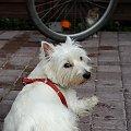 #jesien #koniec #kot #lata #pies #wrzesien #zwierzęta
