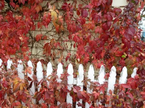 jesien-w-ogrodzie