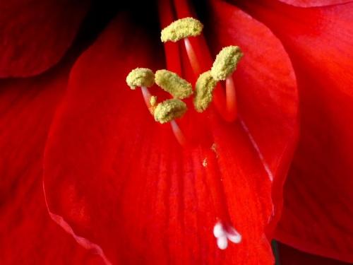 kwiaty z bliska #kwiaty #przyroda
