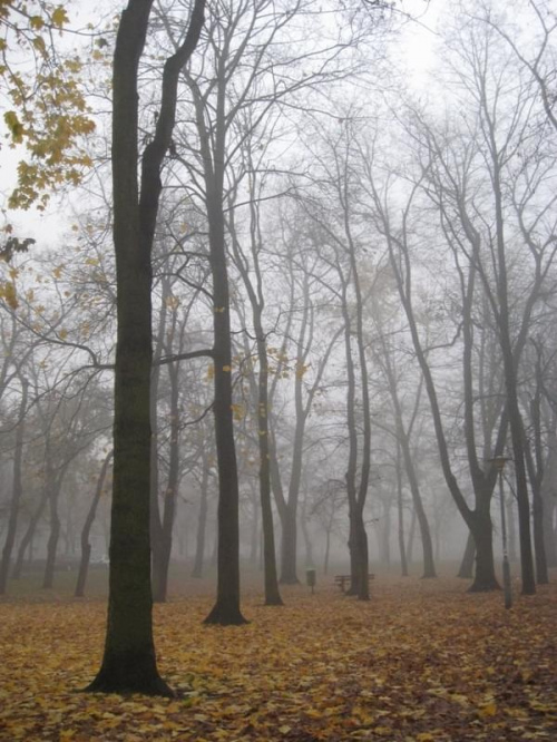Póżna jesień