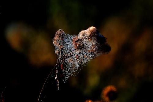 Jesienna pajęczyna #Perełki