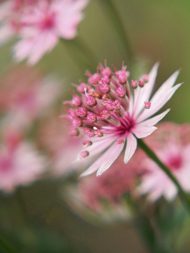 #przyroda #natura #kwiaty #ogród
