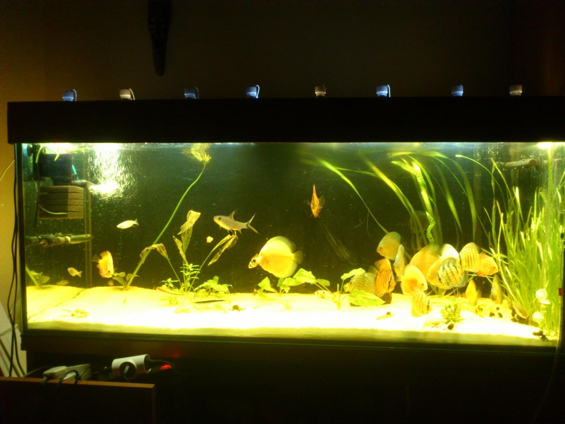 Oświetlenie Led W Akwarium 320 Litrów Akwaryści Akwarystyka