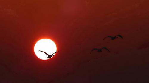 lot #lot #niebo #ptak #ptaki #słońce