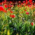 Lipiec #przyroda #widoki #flora