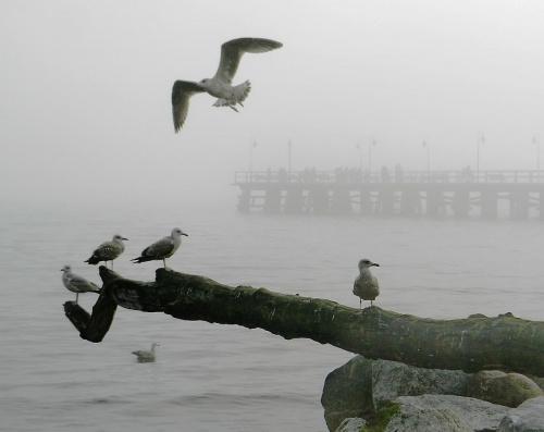 no... ciała lotne #ptak #ptaki #mewa #mewy #Orłowo