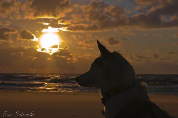 Urlopowo :) #morze #pies #ZachodSlonca
