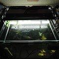 belka, oświetlenie, akwarium #akwarium #belka #oświetlenie