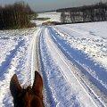 #konie #zwierzęta