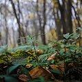 Bliżej ziemi #drzewa #góry #liście #łąki #morza #natura #natury #przyroda #rzeki #urok #zieleń #zwierzęta