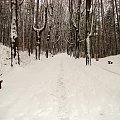 zimowy las #las #drzewa #zima