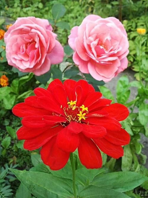 #kwiaty #ogród
