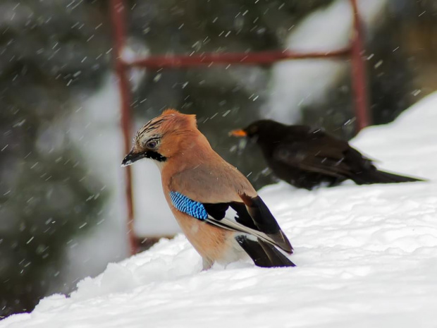 kiepska pogoda2 #przyroda #ptaki #zima