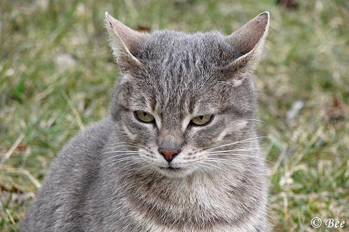 #koty