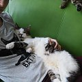 tajfun #kociaki #kot #koteczki #koty